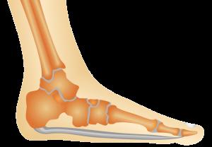 Physiotherapie Deuser & Bauer Mannheim Kniegelenk Anatomie Längsgewölbe
